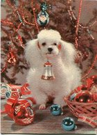 CANICHE EN NAVIDAD, POODLE TOY ON CHRISTMAS, NOEL. POSTAL POSTALE CPA NO CIRCULE - LILHU - Perros