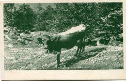FOTOGRAFIA DE UNA VACA, COW VACHE. POSTAL POSTALE CPA NO CIRCULE - LILHU - Vacas