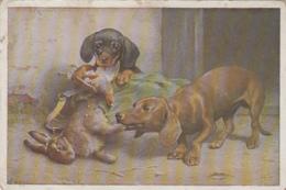 Animaux - Chiens - Basset Teckel Dachshund - Chasseur Chasse - Illustrateur C. Reichert - Dogs