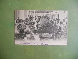 CPA ALPES MARITIMES GRASSE USINE LAUTIER FILS LES FLEURS DE MIMOSA A LA PARFUMERIE 1903 EXC ETAT - Grasse