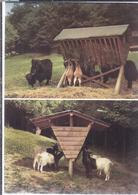 AK-48423 - Bergtierpark - Erlenbach (Odenwald) - Mehrbild (2) -  Yak Und Bergziegen ,  Waliser Ziegen - Animaux & Faune