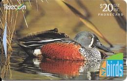 -CARTE-MAGNETIQUE-NEW  ZELANDE-20$-CANARD/SHOVELER-Plastic Epais Glacé TBE- - Gallinaceans & Pheasants