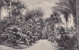 AK Buitenzorg - Gezicht Lands Plantentuin  (42240) - Indonésie