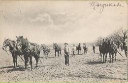 Chevaux Qui Labourent - Circulé 1905 - Union Postale Universelle - Attelages
