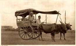 VERY RARE     INDES AN EKKA ATTELAGE   INDIA  INDIEN - India