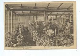 Vilvoorde Vilvorde Ecole D'Horticulture De L'Etat. Serre Aux Chrysanthèmes ( Staat Kijk Naar Links ) - Vilvoorde