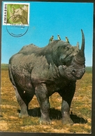 Zimbabwe & Maxi Card, African Wild Life, Rhinoceros, Diceros Bicornis Harare (100) - Zimbabwe