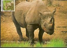 Zimbabwe & Maxi Card, African Wild Life, Black Rhinoceros, Diceros Bicornis Harare (18) - Zimbabwe