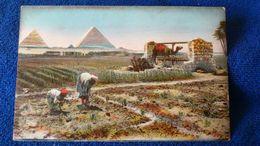 Feast On The Pyramids Egypt - Cairo