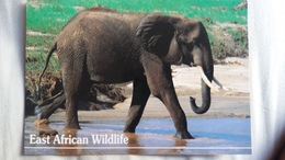 CPM ELEPHANT PHOTO DINO SASSI EAST AFRICAN WILDLIFE TIMBRE TANZANIA - Elefanti