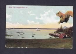 Spring Cove - Squirrel Island - Maine ( Ecureuil G.W. Morris) - Etats-Unis