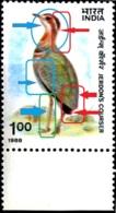 BIRDS-JERDON'S COURSER-ERROR-COLOR SHIFT- INDIA-1988 - SCARCE- MNH- B9-892 - Grues Et Gruiformes