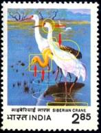 BIRDS-SIBERIAN CRANE-ERROR-COLOR SHIFT- INDIA-ODD VALUE- SCARCE- MNH- B9-892 - Grues Et Gruiformes