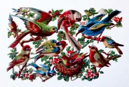 PLANCHE NUMÉROTÉE DE  CHROMOS DECOUPIS.......L : 14   H : 9  Cm   . OISEAUX DIVERS - Animals