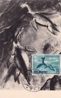 San Marino 1966 THAUMATOSAURUS VICTOR Maximum Dinosaurs - Préhistoriques