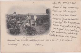 Bu - Cpa 1905 - Les Vendanges Dans Le Midi - Vigne