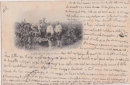 Bu - Cpa 1905 - Les Vendanges Dans Le Midi - Vines
