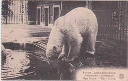 ANTWERPEN-ZOO-DIERENTUIN-JARDIN ZOOLOGIQUE-BEER-OURS- VERSTUURD 1921-ZEGEL WEG-ZIE DE 2 SCANS-MOOI ! ! ! ! - Antwerpen