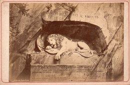 Photo Ancienne Sur Carton - Le Lion De Lucerne / Luzern ( Dim 16x10 Cm) - Anciennes (Av. 1900)