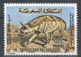 MOROCCO HYENE DE BERBERIE FAUNE ANIMALS - Morocco (1956-...)