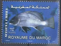 MOROCCO FAUNE MARITIME POISSON FISH SEA 2010 - Morocco (1956-...)