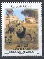 MOROCCO FAUNE FAUNA LION DE L' ATLAS 2011 - Morocco (1956-...)
