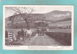 Small Post Card Of Homeward,Swanston,James Patrick,V105. - Autres