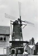 MEGEN Galerijmolen 1966  Molen / Mill / Mühle / Moulin - Autres