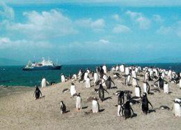 1 AK Falkland * Forschungsschiff Zwischen Den Falkland Inseln Und Eine Pinguin Kolonie * - Falkland