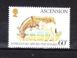 Ascension - 1983. Asino E Suo Puledro. Donkey And His Foal. MNH - Asini