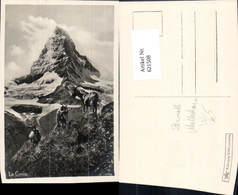 621508,Foto Ak Zermatt Matterhorn Le Cervin Ziegen Tiere - VS Wallis