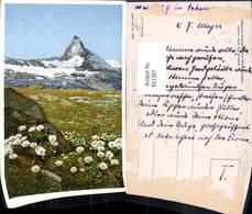 621507,Zermatt Matterhorn Blumen Alpen-Wucherblume I. Vordergrund Pub Photochromie 57 - VS Wallis