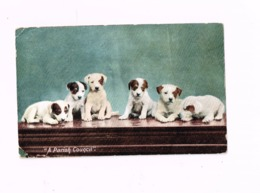 A Parish Council.Expédié En 1905.Petit Pli De Coin. - Dogs