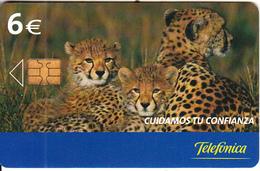 SPAIN - Leopards, Tirage 6000, 09/05, Used - Jungle