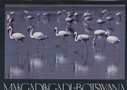Makgadikadi-Botswana - - Botswana