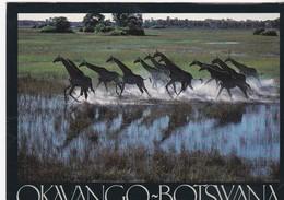 Okavango-Botswana - - Botswana