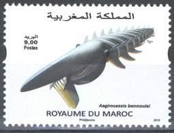 MOROCCO FAUNE MARINE REQUIN SHARK 2015 - Morocco (1956-...)