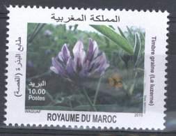 MOROCCO PLANTES LA LUZERNE AGRICULTURE PLANTS 2010 - Morocco (1956-...)