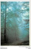 Photo Cpsm Cpm 77 FONTAINEBLEAU. La Forêt Tiré à 1000 Exemplaire Par Prunier - Fontainebleau