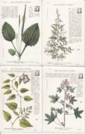 CPA / LOT DE 16 CPA / LES PLANTES UTILES - Botanik