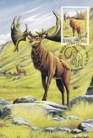 Ireland 1999 Maximum Gigant Deer (Megaceros) - Timbres
