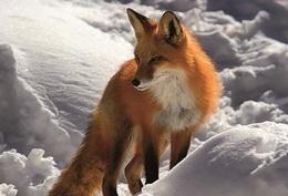 Endangered Fauna WWF Postcard Collection - Size 15x10 Aprox Unused - Tierwelt & Fauna