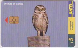 #11 - URUGUAY-40 - BIRD - Uruguay