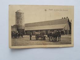 41105    -  Poppel  St Isidorus  Hoeve -Boerenbond  -  ATTELAGE - Ranst