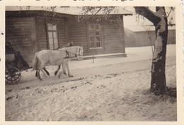 Foto Pferdegespann Vor Holzhaus Im Winter - 2. WK - 8,5*5,5cm (42273) - Krieg, Militär
