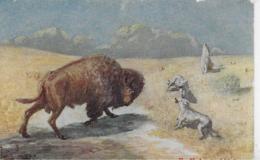AK 0275  Buffalo And Wolfes ( Büffel Und Wölfe ) - Motiv Um 1920 - Kühe