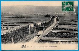 CPA 77 Vue Panoramique Sur Les Murs De THOMERY (Culture Du Raisin, Vigne) ** Agriculture - France