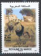MOROCCO ANNEE FAUNE LION DE L' ATLAS 2011 - Morocco (1956-...)