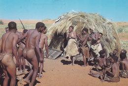 Bushmen Dance Bushman Naked Men Showing Lady Dancing South Africa Postcard - South Africa