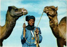 CPM Scene Du Sahara Marocain MAROC (881315) - Morocco
